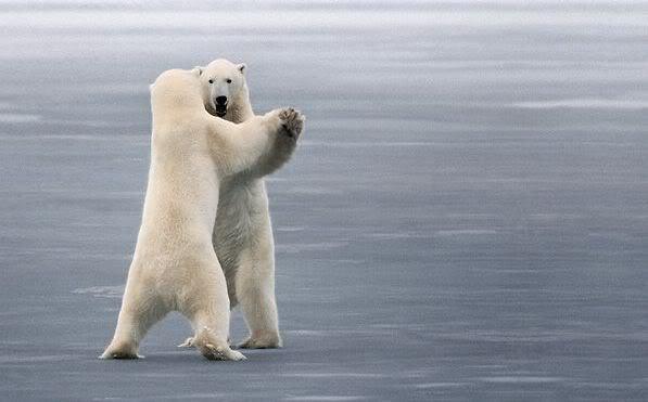 Топ-10: Фотографии животных в медленном танце