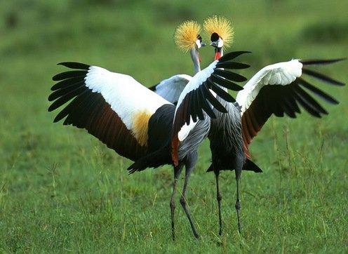 Top 10: Fotos de animales en baile lento.