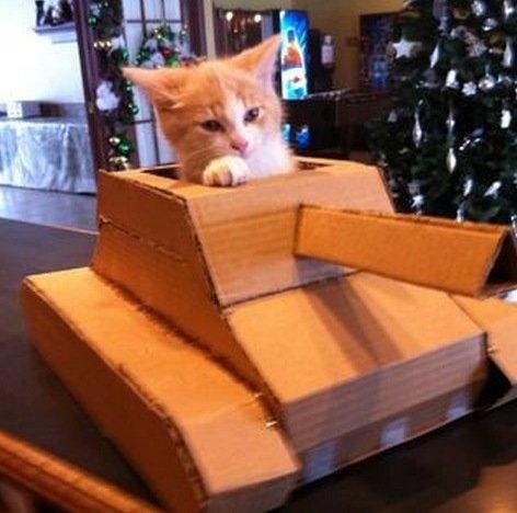 Кошки в танках (15 фото)