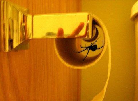 Худшие места, в которых можно обнаружить пауков (12 фото)