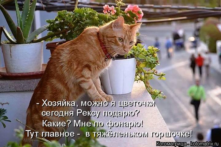 http://www.bugaga.ru/uploads/posts/2015-01/1422030915_kotomatrica-13.jpg