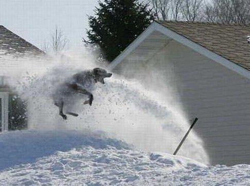 Собаки играются со снегом (10 фото)
