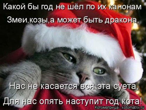 Новогодняя котоматрица (36 фото)