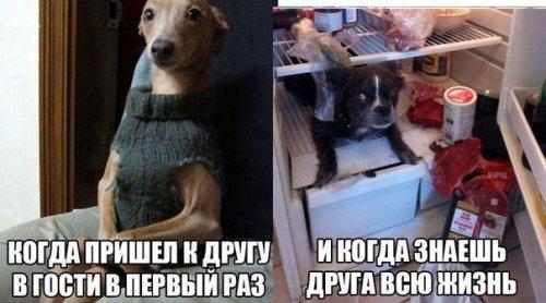 Новые анекдоты (9 шт)