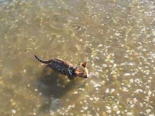 Милота: котенок наслаждается плаваньем