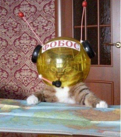 Кото-приколы онлайн (15 шт)