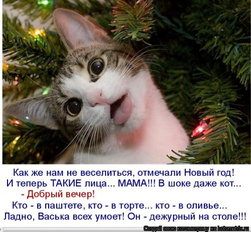 Новая котоматрица для всех! (36 фото)