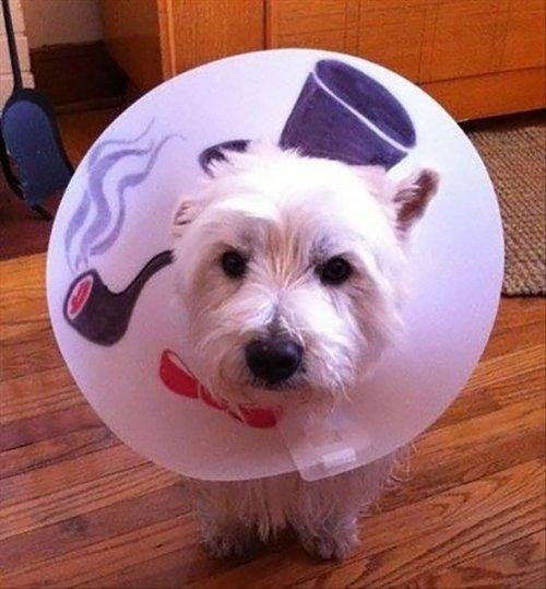 Креативные защитные воротники для домашних животных (26 фото)