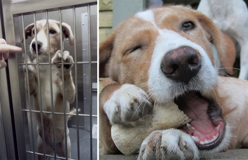 Животные до и после обретения дома (34 фото)