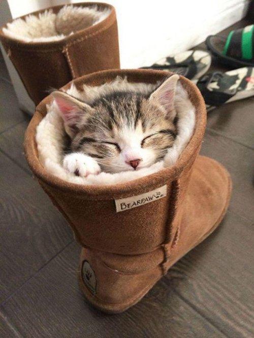 Кошачья логика в прикольных картинках (13 шт)