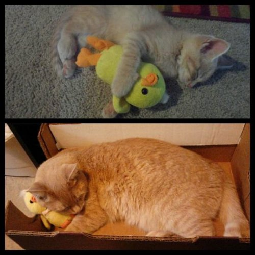 Забавные спящие животные 18 фото