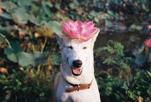Самая счастливая в мире собака Глута, взятая с улицы и победившая рак (16 фото + видео)