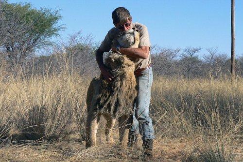 11-летняя дружба между львом и человеком, который его спас (9 фото + видео)