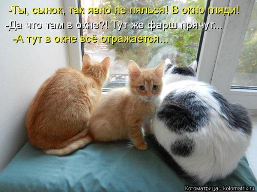 Новая смешная котоматрица (34 фото)