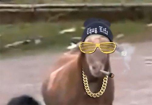 Животные - гангстеры