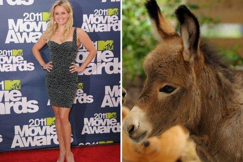 Топ-10: Самые известные домашние животные знаменитостей