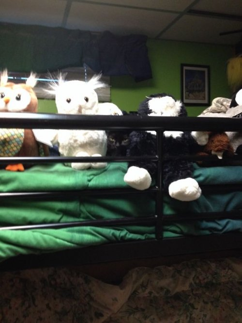 Кошачьи прятки (34 фото)