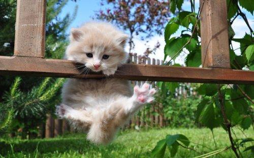 Кошки-ниндзи (34 фото)
