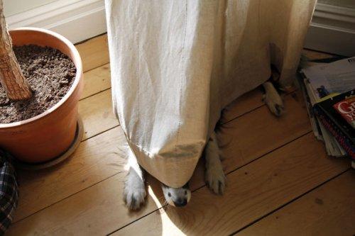 Собачьи прятки (35 фото)
