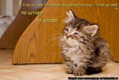 Новая котоматрица для хорошего настроения (35 фото)