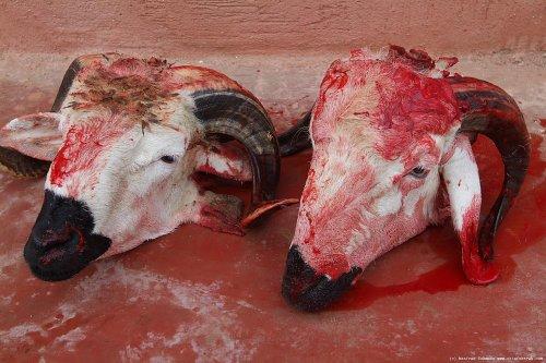 Топ-10: Самые отвратительные и опасные виды уличной еды