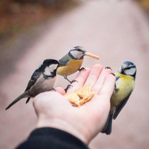 Лесные животные в замечательных фотографиях Консты Пункка (23 фото)