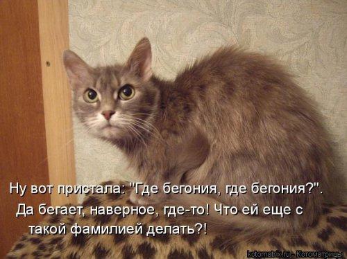 Новая котоматрица для позитива (35 фото)