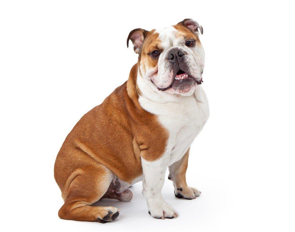 вид собак с фото
