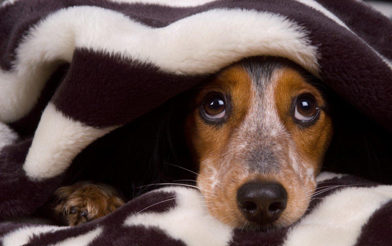 Image result for интересное про собак