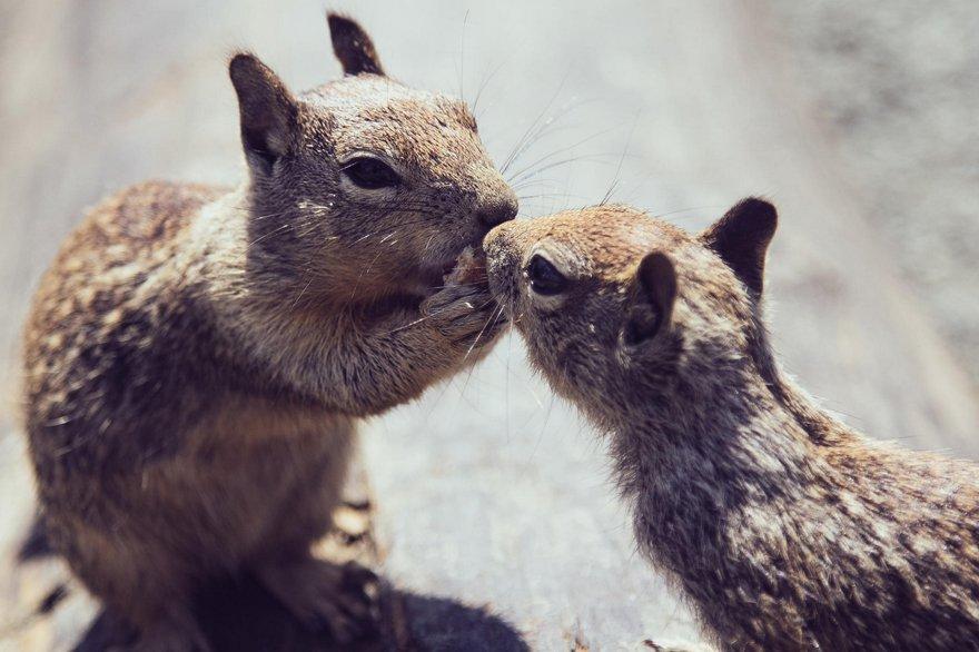 Картинки любовь животных