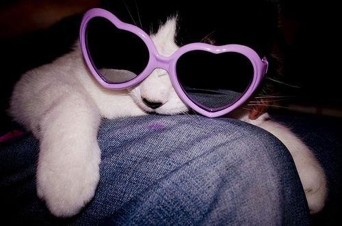 Влюблённые коты и кошки в очках в форме сердца (10 фото)