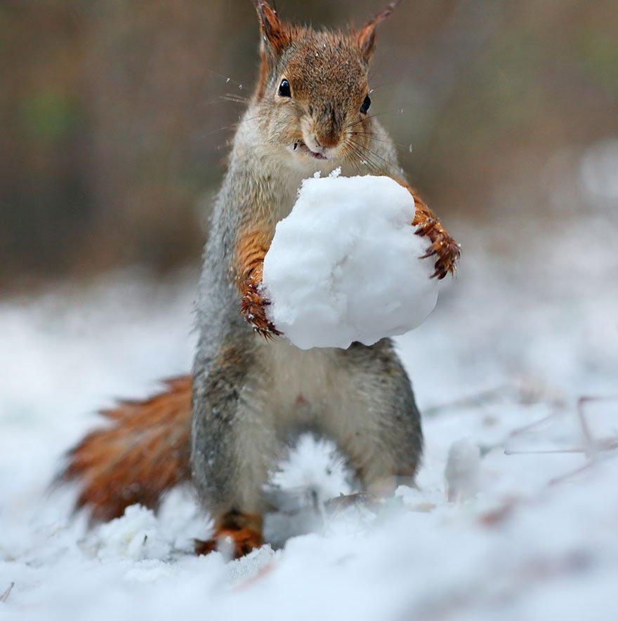 Красивые картинки зимние приколы