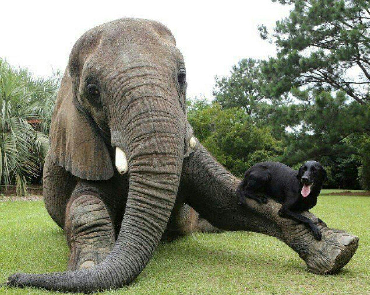 Смотреть сношение слонов 9 фотография