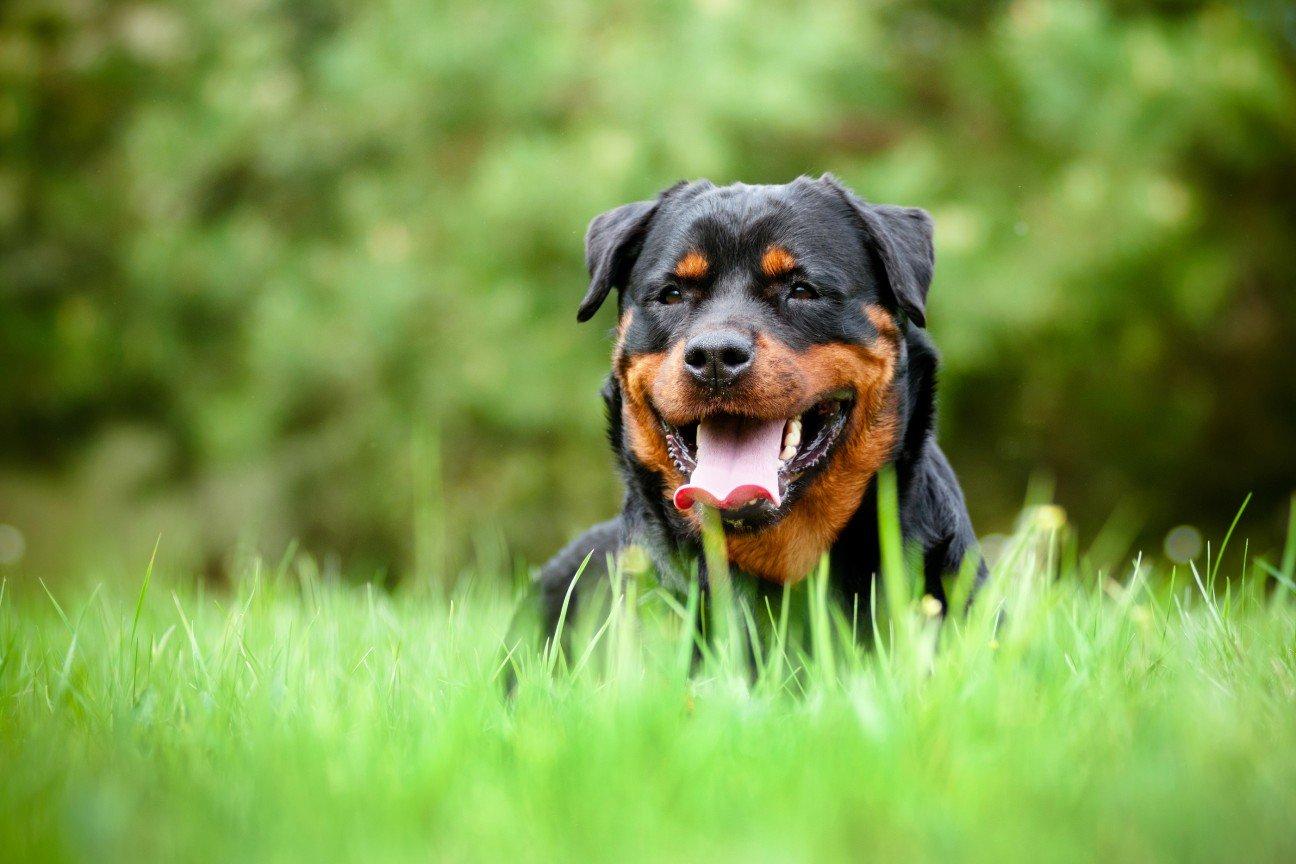 картинки собак собак