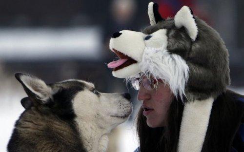 Седивакув — гонки на собачьих упряжках в Чехии (18 фото)