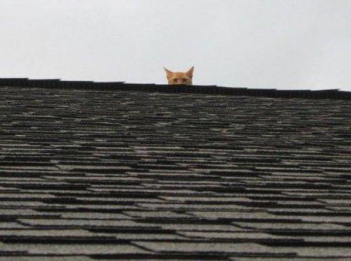 Прикольные картинки с кошками (17 фото)