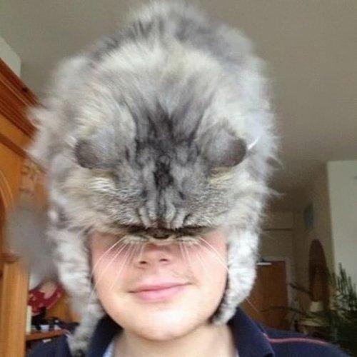 Кошки вместо шапок (29 фото)