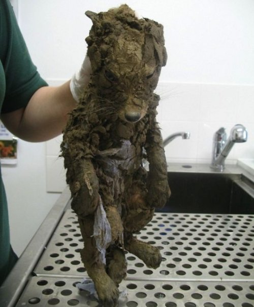 Спасение лисёнка, угодившего в яму с грязью (3 фото)