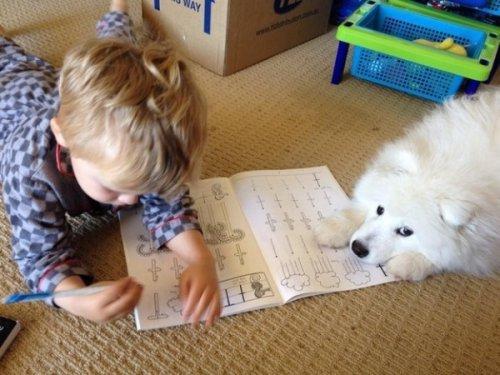 Собака – лучший друг человека (25 фото)