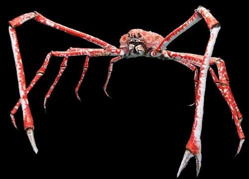 Топ-25: Животные с самыми странными пропорциями тел