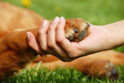 Топ-10: Интересные и малоизвестные факты о собаках
