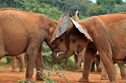 Любовь и дружба в мире животных. Часть 1 (35 фото)