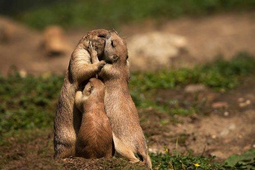 Любовь и дружба в мире животных. Часть 2 (33 фото)
