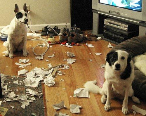 Собаки-шкодники (29 фото)