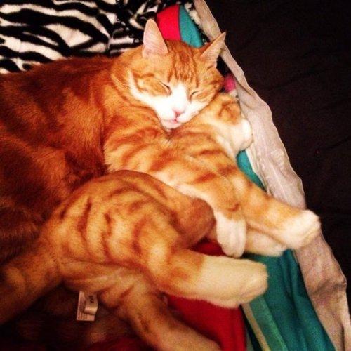 Плюшевые двойники домашних питомцев от Cuddle Clones (18 фото)