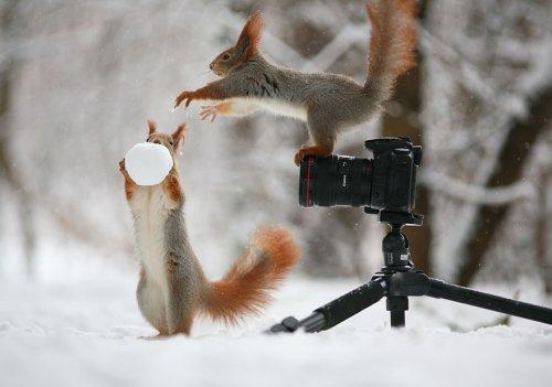 Очаровательные белочки в фотографиях Вадима Трунова (15 фото)