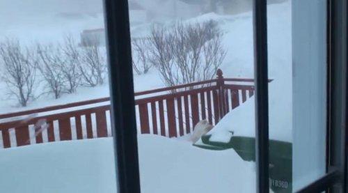 Тяжёлый путь домой кота после снегопада