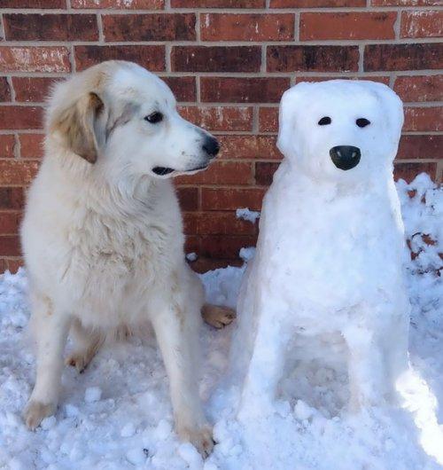 Снеговики, похожие на домашних животных (11 фото)