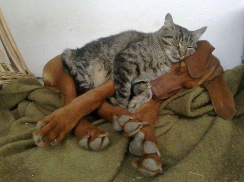 На подушке и сон слаще… (34 фото)