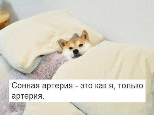 Анекдоты-коротыши (11 шт)